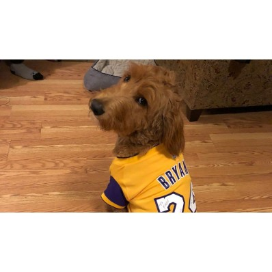 kobe lakers jersey for dog